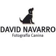 David Navarro - Fotografía Canina